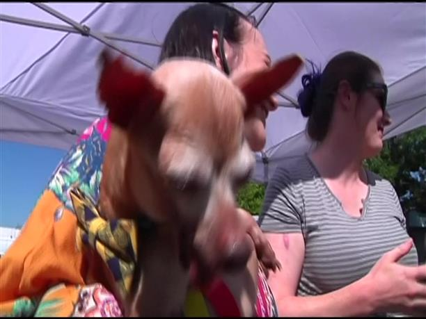 Καλλιστεία για το πιο άσχημο σκυλί του κόσμου