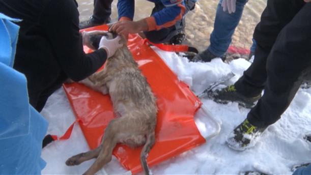 Διάσωση σκύλου από παγωμένη λίμνη