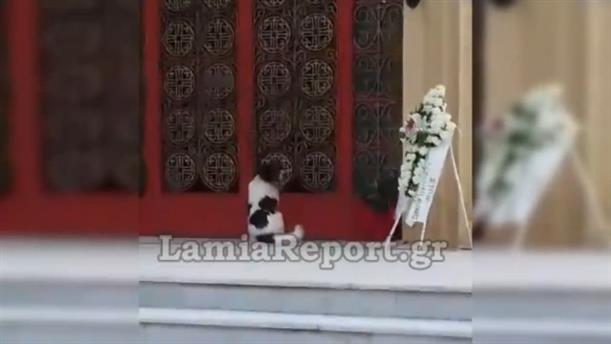 Συγκινητική αντίδραση σκύλου στην κηδεία του αφεντικού του