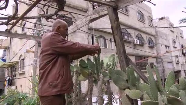 Παλαιστίνη: Φυτεύουν λαχανικά στις ταράτσες τους λόγω της κρίσης