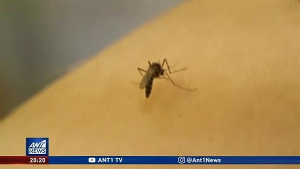 Το τσίμπημα από κουνούπι, δεν είναι μόνο ενοχλητικό, αλλά ενίοτε και επικίνδυνο