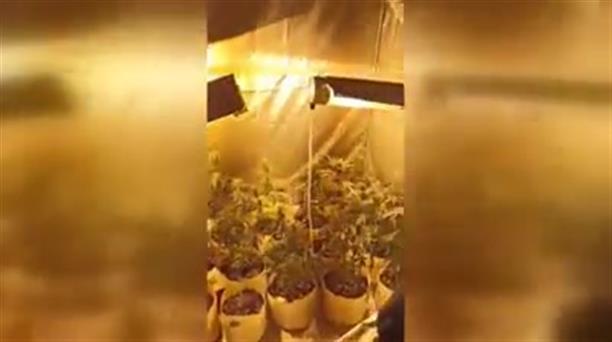 Σέρρες: Εργαστήριο υδροπονικής καλλιέργειας κάνναβης σε διαμέρισμα