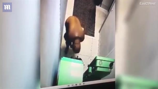 Κλέφτης ΑΤΜ έχασε τη ζωή του από τα ίδια τα εκρηκτικά που χρησιμοποίησε