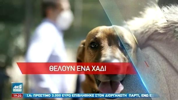 Παγκόσμια Ημέρα Αδέσποτων Ζώων: Θλιβερά τα στοιχεία στην Ελλάδα