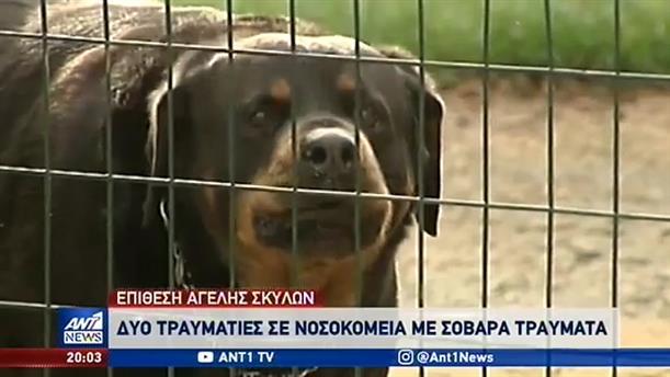 Τραυματίες από επίθεση αγέλης σκύλων στον Διόνυσο