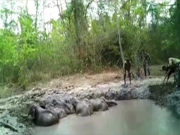Ελεφαντάκια παγιδεύτηκαν σε βαθύ λάκκο με λάσπη