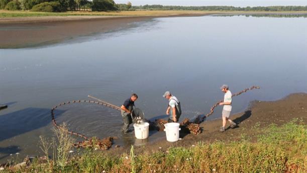 Διάσωση ψαριών από αποξηραμένη λίμνη