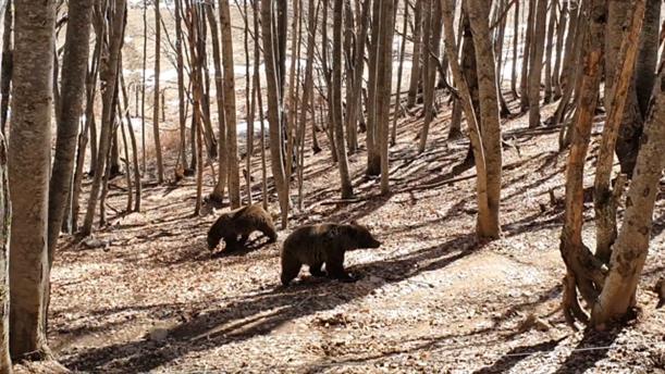 Η Μίρα και ο Ντιουκ κάνουν τις πρώτες βόλτες στο Καταφύγιο της Αρκούδας