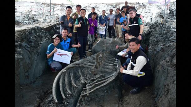 Ανακάλυψαν σπάνιο σκελετό φάλαινας στην Ταϊλάνδη