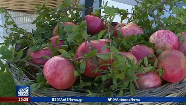 Ερμιόνη: Χιλιάδες επισκέπτες στην 9η Γιορτή Ροδιού