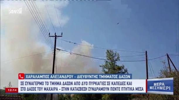 Διευθυντής τμήματος δασών για την πυρκαγιά στην Κύπρο