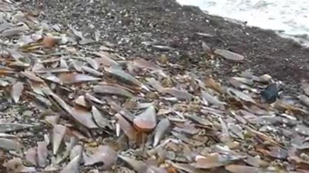 Πίνες ξεβράστηκαν σε παραλία της Λέσβου