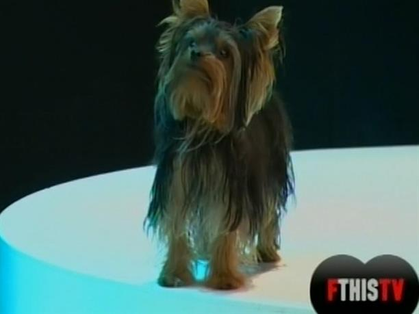 FTHIS TV 02/10/2012