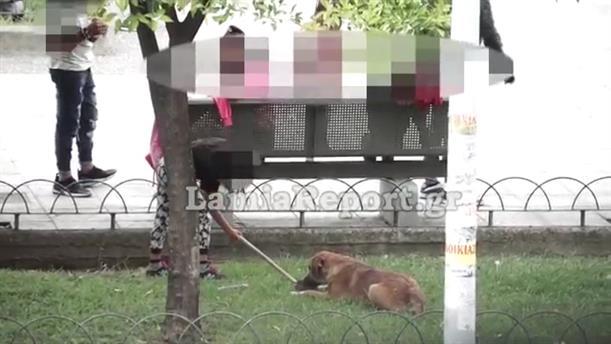 Έριχναν νεογέννητο γατάκι σε σκύλο για να το φάει