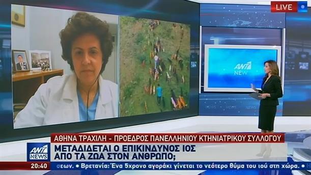 Η Αθηνά Τραχήλη στον ΑΝΤ1 για τον κορονοϊό και την φροντίδα ζώων συντροφιάς