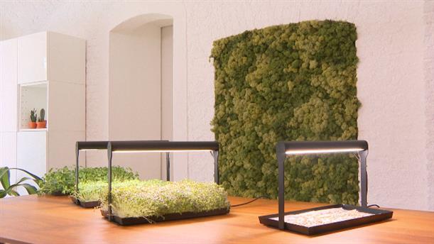 Συσκευή για την καλλιέργεια λαχανικών μέσα στην κουζίνα σας