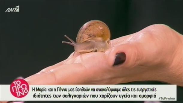 Μάθετε για τις ευεργετικές ιδιότητες των σαλιγκαριών