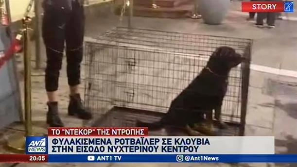 """Σάλος για την """"ατραξιόν"""" με σκυλιά σε κλουβιά στα Λαδάδικα"""