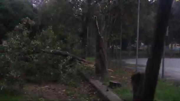 Πτώση δέντρου στη Θεσσαλονίκη