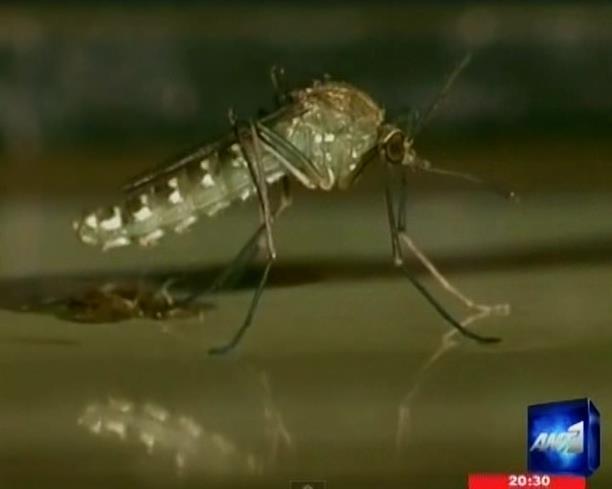Νέος θάνατος από τον ιό του Δυτικού Νείλου