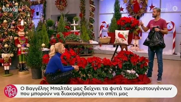 Φυτά για χριστουγεννιάτικη διακόσμηση – Το Πρωινό – 17/12/2019