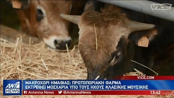 Μια διαφορετική φάρμα αγελάδων στο Vice Greece