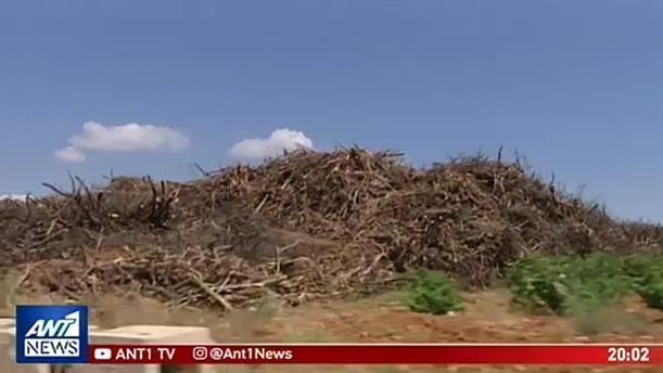 Κραυγή αγωνίας κατοίκων στο Μάτι για οικόπεδο-«βόμβα» γεμάτο ξύλα και κλαδιά