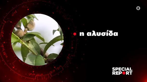 Η αλυσίδα - Special Report - Τρίτη στις 24:00