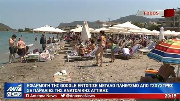 Μεγάλος πληθυσμός από τσούχτρες εντοπίστηκε σε παραλίες της Ανατ. Αττικής