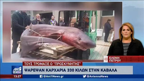 Καρχαριοειδές εκατοντάδων κιλών αλιεύθηκε στην Καβάλα