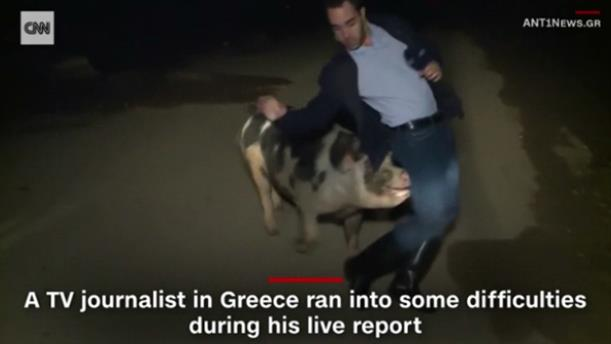 Η περιπέτεια του δημοσιογράφου του ΑΝΤ1 με ένα γουρούνι, στο CNN