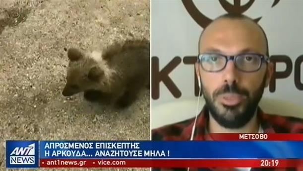 Έκπληκτος οδηγός στο Μέτσοβο αντίκρυσε μπροστά του μια αρκούδα