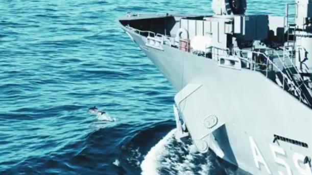 Τι απαντά η Τουρκία για τα νεκρά δελφίνια στο Αιγαίο κατά την άσκηση Γαλάζια Πατρίδα