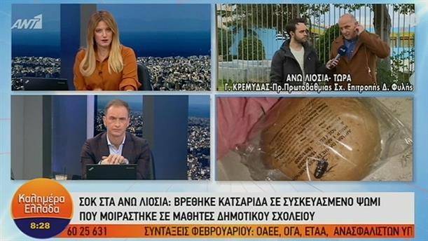 Βρέθηκε κατσαρίδα σε συσκευασμένο ψωμί – ΚΑΛΗΜΕΡΑ ΕΛΛΑΔΑ – 21/01/2020