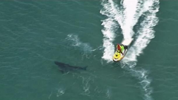 Επίθεση καρχαρία σε σέρφερ στην Αυστραλία