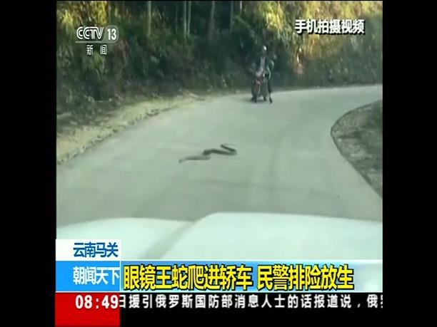 Έβγαλαν φίδι 2,7  μέτρων από μηχανή αυτοκίνητου!