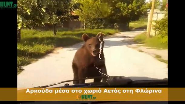 Αρκούδα έκλεισε το δρόμο σε οδηγό, στη Φλώρινα