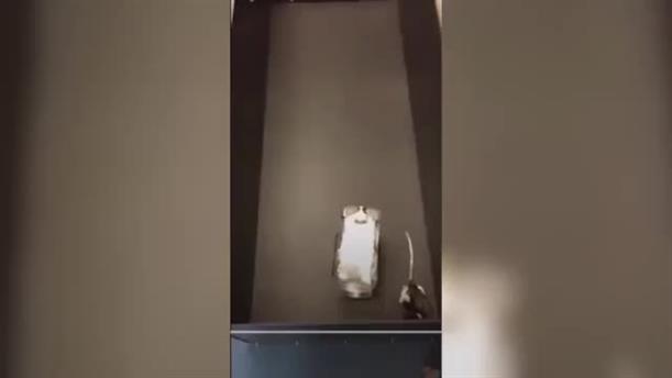 Επιστήμονες εκπαίδευσαν ποντίκια να οδηγούν μικρά αυτοκίνητα για να συλλέγουν το φαγητό τους