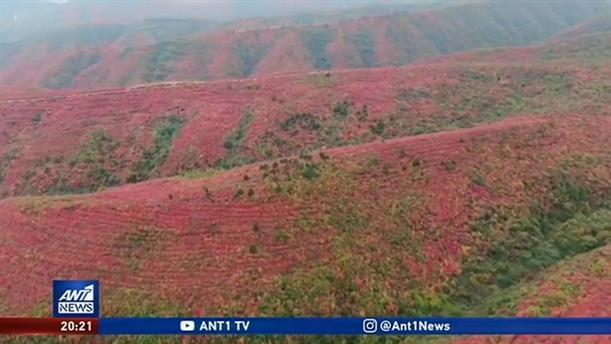 """""""Μαγεύουν"""" τα φθινοπωρινά χρώματα που στολίζουν τα βουνά της Κίνας"""