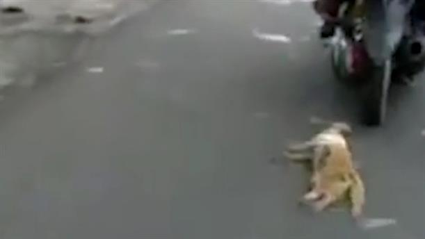 Έσερναν δεμένη γάτα από το λαιμό πίσω από τη μοτοσικλέτα τους