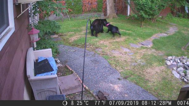 Σκύλος προστάτευσε σπίτι από... αρκούδα