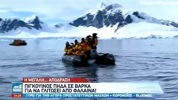 Πιγκουίνος πήδηξε σε βάρκα για να γλιτώσει από φάλαινα
