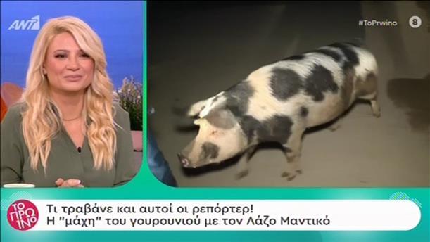 """Η στιγμή που γουρούνι κυνηγάει ρεπόρτερ του """"Καλημέρα Ελλάδα"""""""