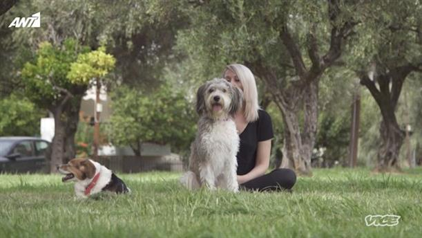 VICE SPECIALS - «Εγκατάλειψη, Κακοποίηση και Υιοθεσίες Ζώων»