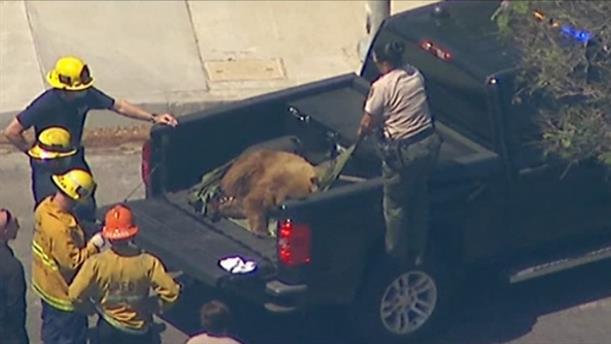 Αρκούδα έκανε βόλτες στην Καλιφόρνια