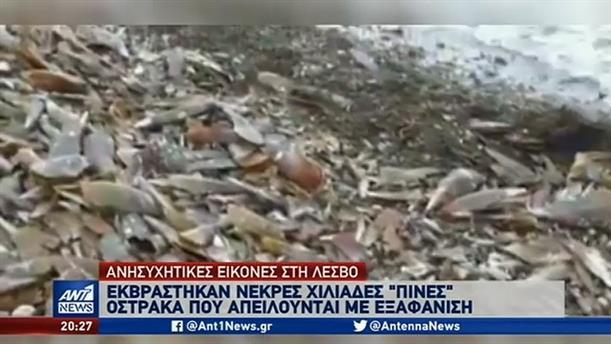 Προβληματισμός για τις χιλιάδες νεκρές πίνες που ξεβράστηκαν σε ακτή