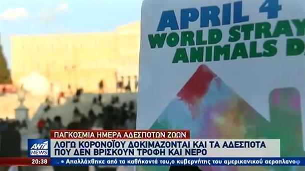 Παγκόσμια Ημέρα Αδέσποτων Ζώων: τα μηνύματα γνωστών ηθοποιών για τα τετράποδα