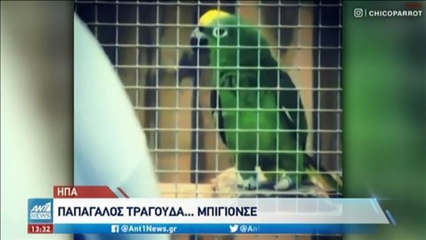Παπαγάλος τραγουδά… Μπιγιονσέ!