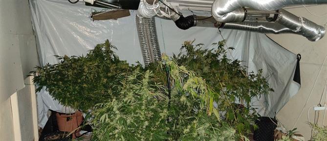 Εντοπίστηκε εργαστήριο υδροπονικής καλλιέργειας κάνναβης (εικόνες)
