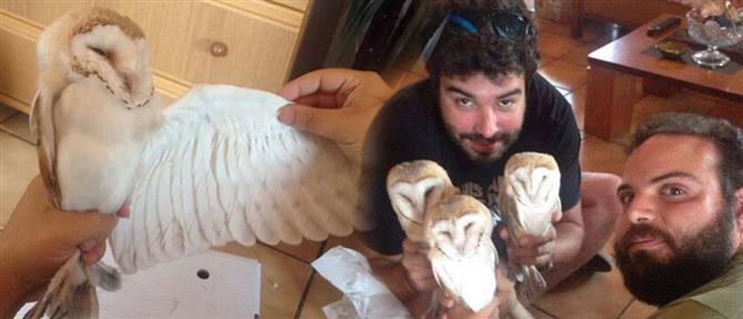 Βρήκαν μέσα στο σπίτι τους 6 μικρές κουκουβάγιες (εικόνες)